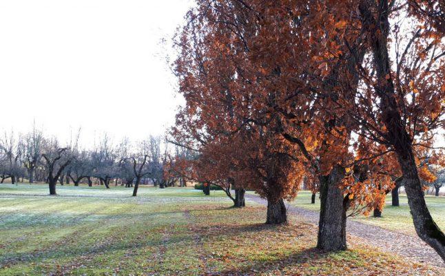 Allee mit Bäumen